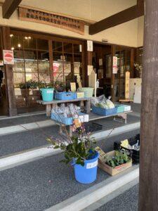 今が見頃!!梅の花で日本の四季を感じよう![ロマントピア月ヶ瀬・月ヶ瀬梅林]