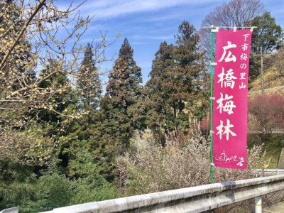 まさに見ごろ‼奈良の三大梅林に行ってみよう‼[広橋梅林]