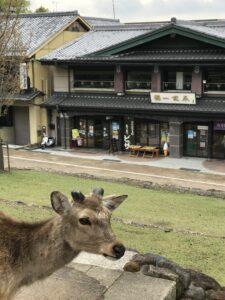 ピザを堪能しながら奈良市内を見渡そう!!ハイキングデビューにもおすすめ♪[山のカフェ・若草山]